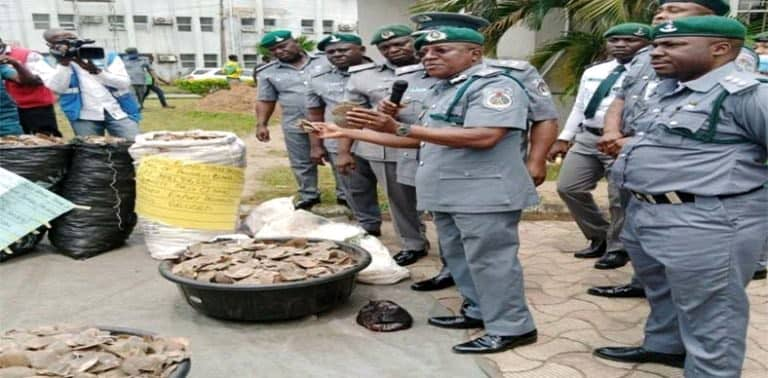 Customs seizes pangolin scales, claws worth N1.7bn in Lagos - The Street  Journal